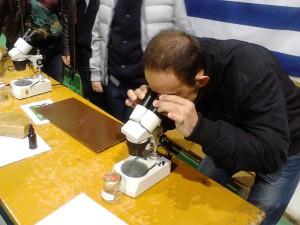 παρατήρηση της μέλισσας στο μικροσκόπιο
