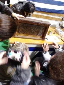 μελέτη της κοινωνίας των μελισσών σε διάφανη κυψέλη